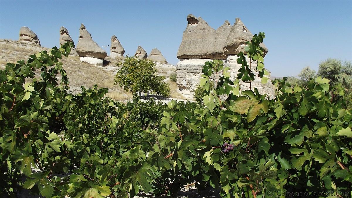 Виноградник с скальными конусами недалеко от Аваноса