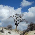 Высохшее дерево в Долине Любви