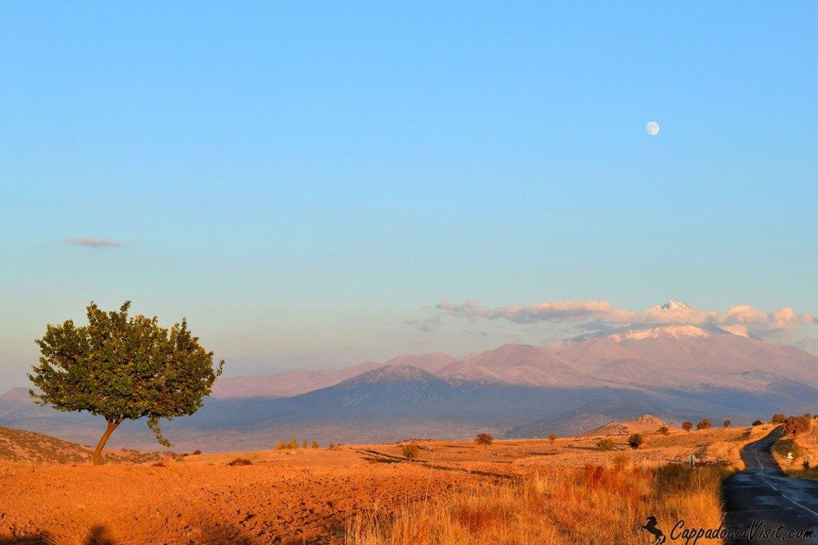 Гора Эрджиес и одинокое дерево