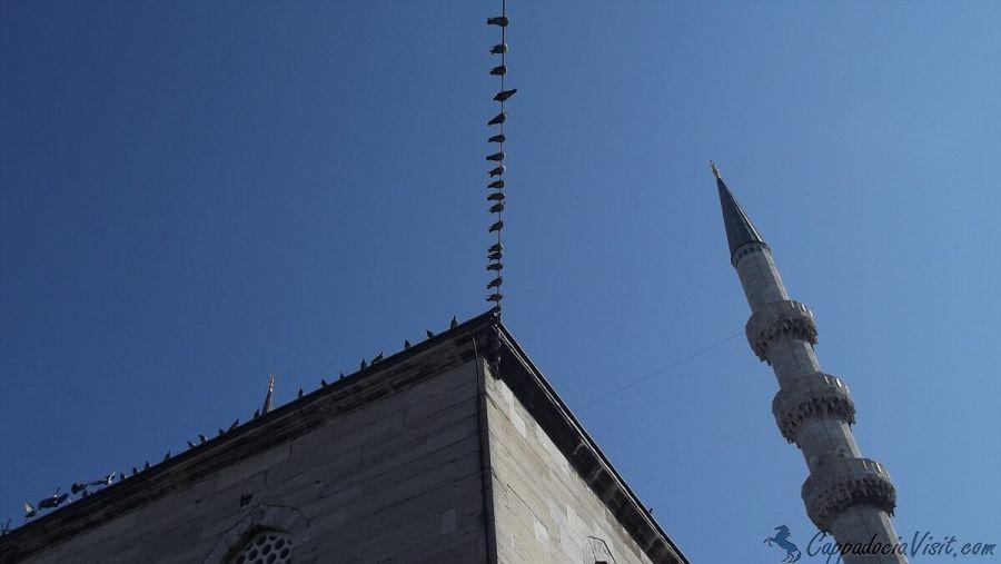 Голуби на крыше Новой мечети