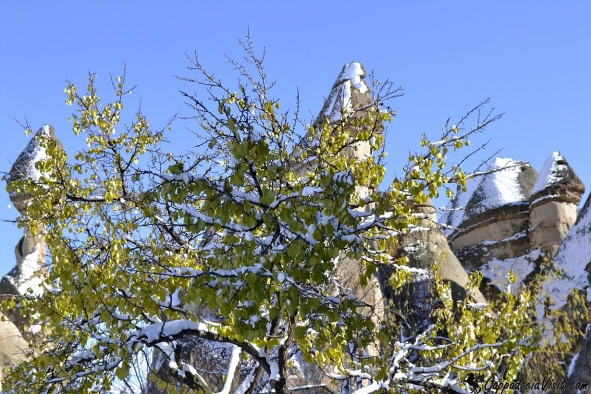 Последние жёлтые листья абрикосового дерева