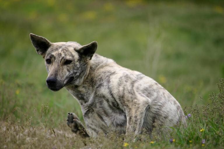 Собачка в долине