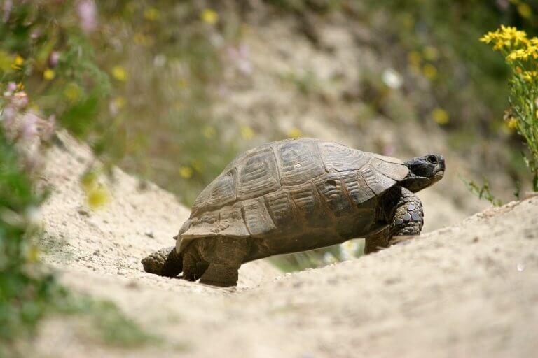 Черепаха в Каппадокии