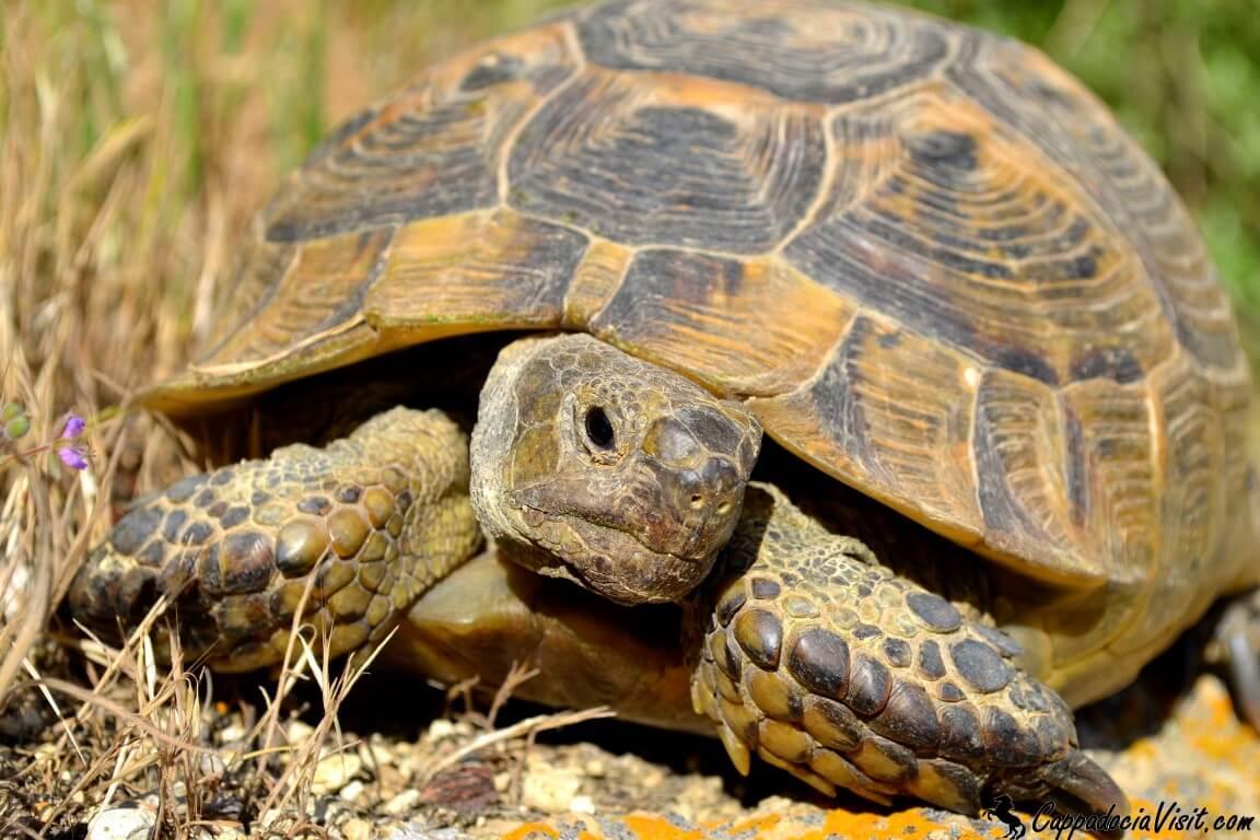 Любопытная черепаха
