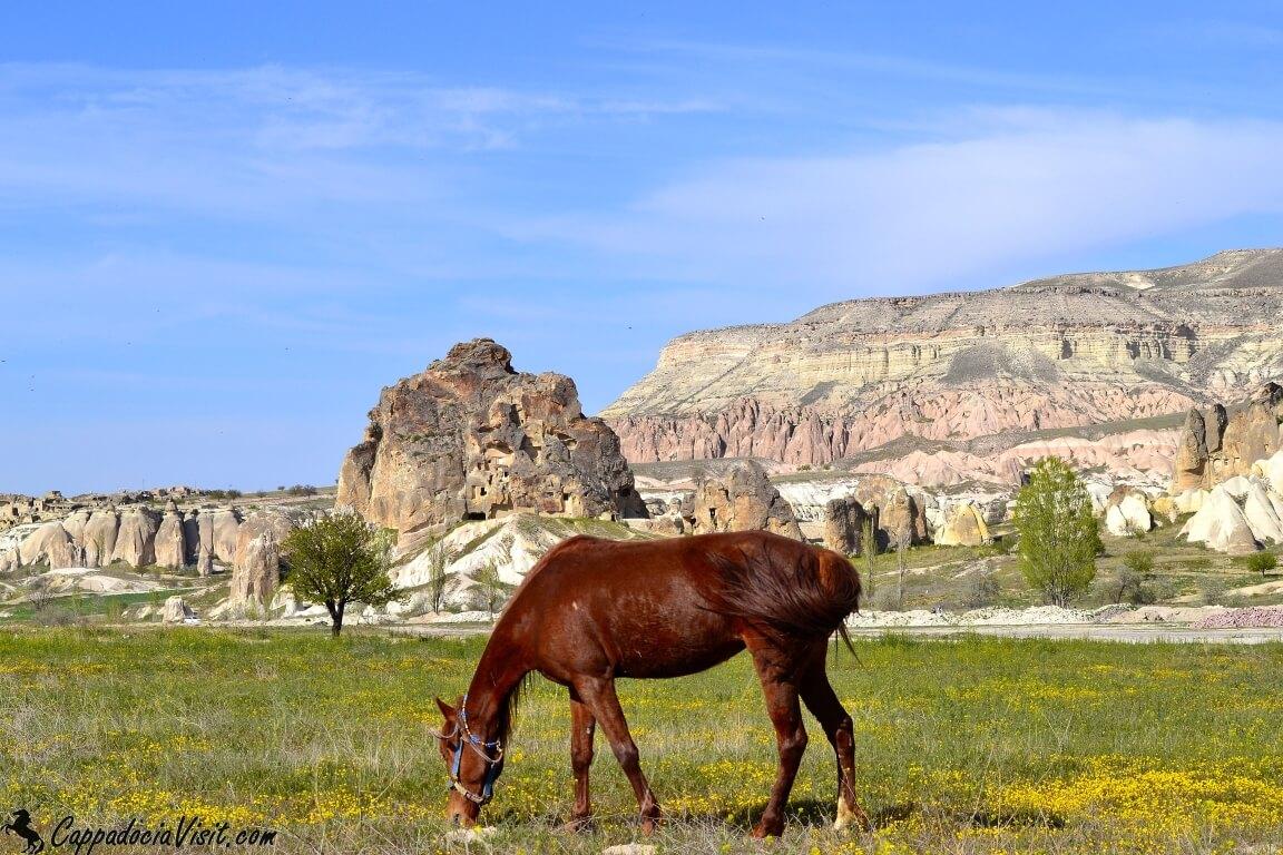 """Каппадокия """"страна красивых лошадей"""""""