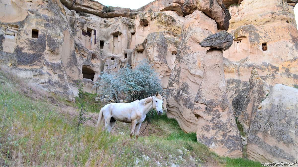 Форум сайта Каппадокия и вся Турция