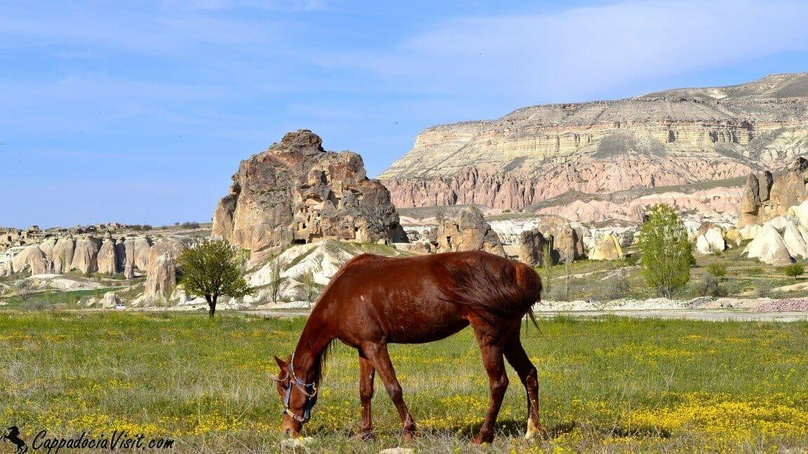 Каппадокийский конь недалеко от Гёреме